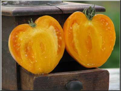 Tomate coeur de boeuf semeur - Planter des tomates coeur de boeuf ...