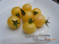 Tomate petite pomme blanche-2.jpg