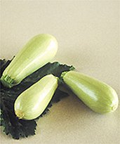 COURGETTE blanche d egypte-1.jpg