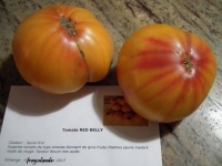 Tomate red belly-1.jpg